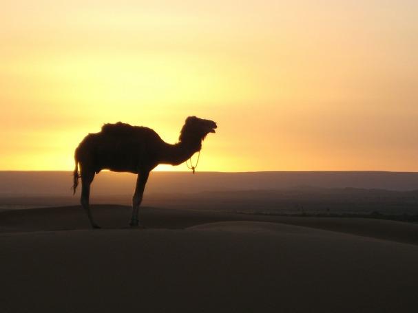 desert-242486_1280