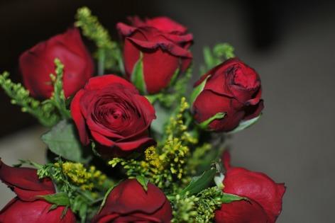 rose-577208_1280